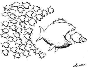 anarchyfish